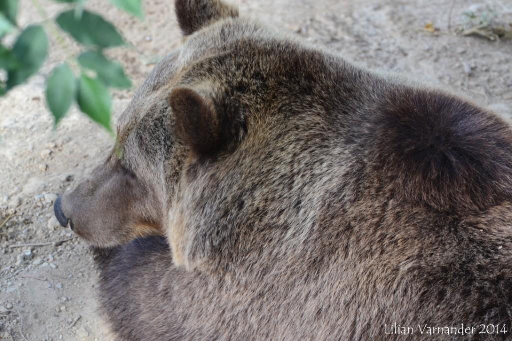 Krambjörn