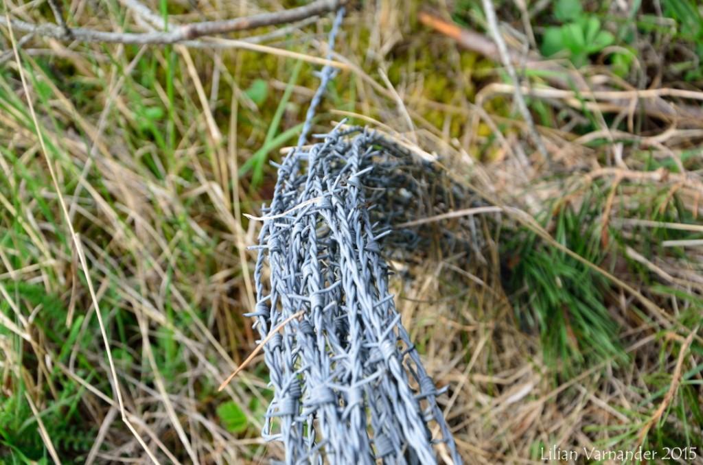 Taggtråd