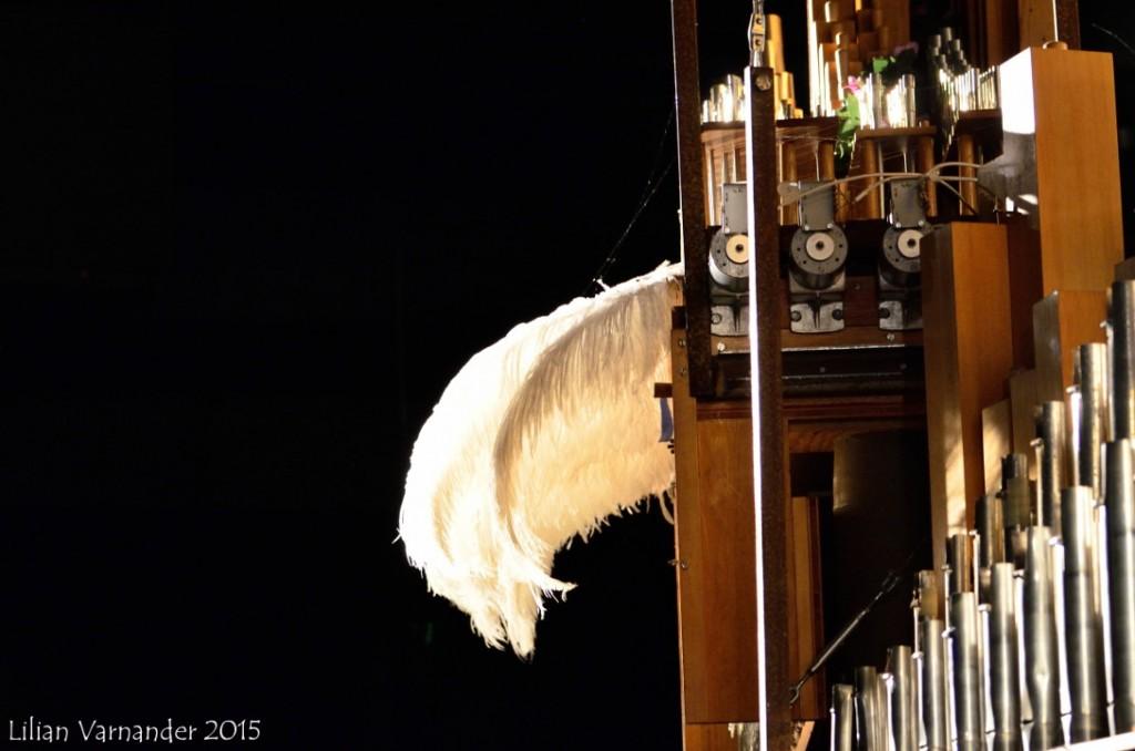 Orgel fjäder2