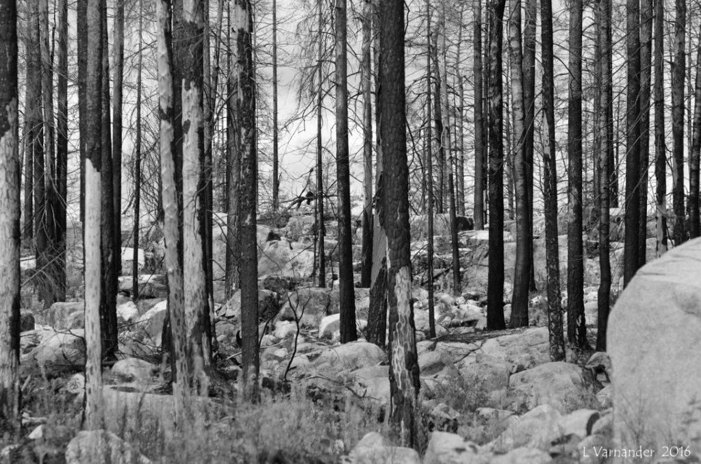 brand-skog